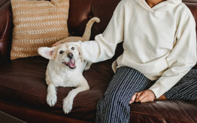 Pets & Fine Leather Furniture